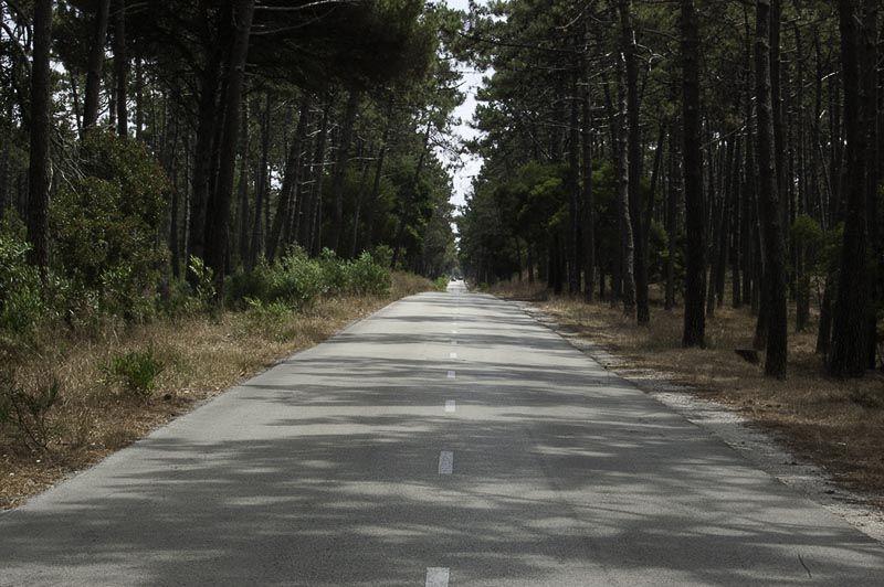 Aveiro nazare carretera