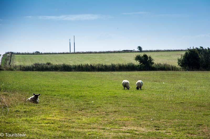 campos Dover Inglaterra