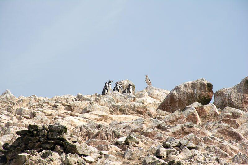 impressions trip to Peru, paracas, Islas Ballestas, peru