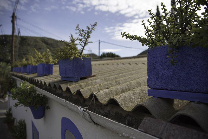 Sopalmo Azul. Cabo de Gata