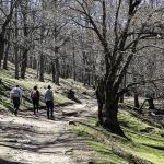 El Castañar del Tiemblo en la Sierra de Gredos