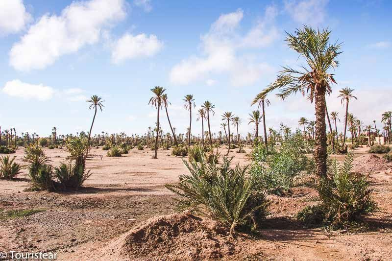 The Marrakesh Palm Grove