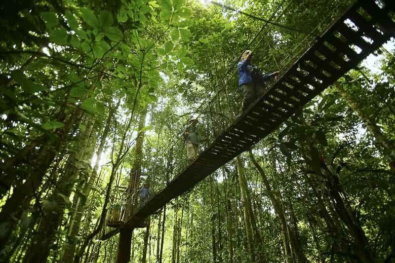 Peruvian Forest, Loreto, Iquitos, Peru