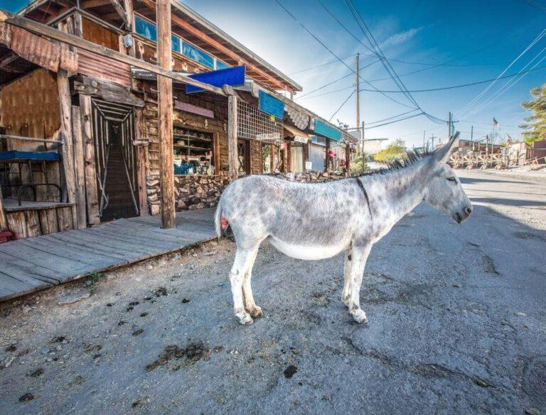 Oatman AZ, Route 66 Unique Ghost Town